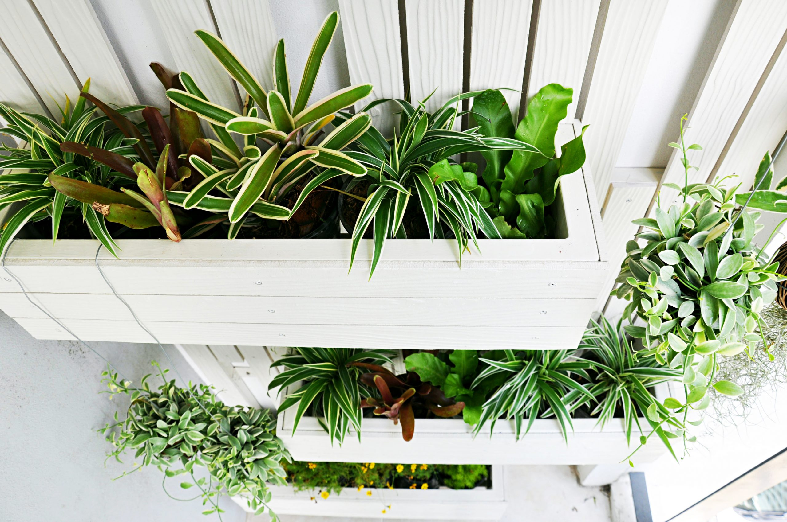 Green fingers? Here are the SoH. small space gardening ideas